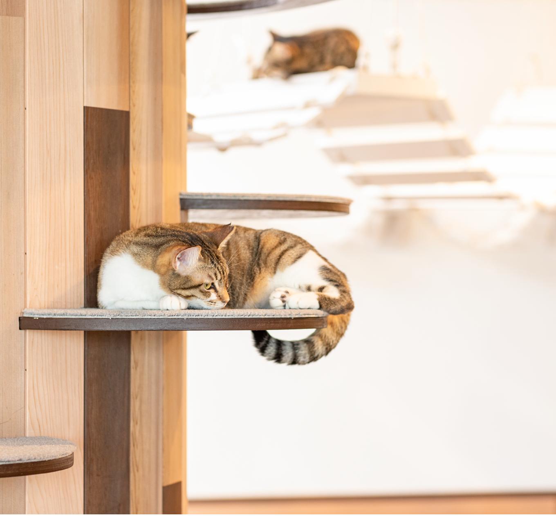 保護猫ちゃん達のご紹介はこちら